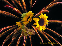 fireworks with sunflowers set inside