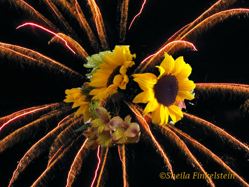 fireworks with sunflower inset