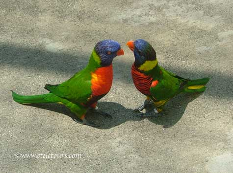 two lorikeets from Butterfly World