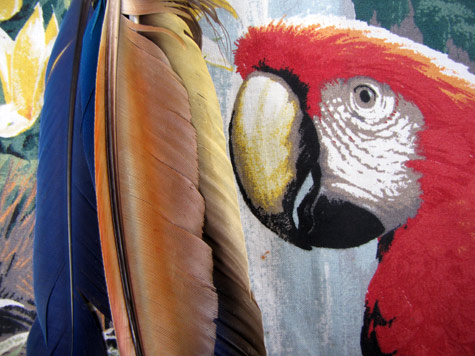 Macaw feathers on a printed fabric