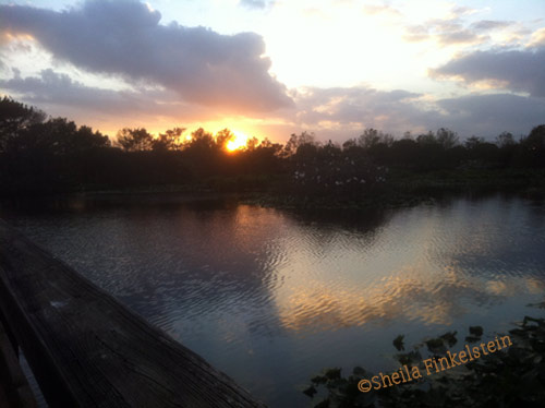 sunset in Wakodahatchee Wetlands