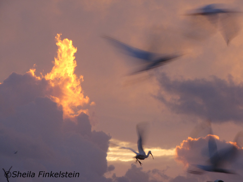 birds flying at sunrise in Wakodahatchee Wetlands