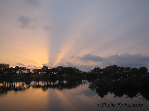 sun's rays at sunrise in Wakodahatchee Wetlands