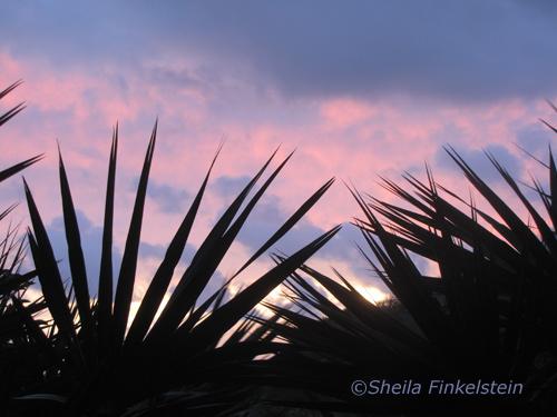 sunrise at Wakodahatchee Wetlands on 12-29-13